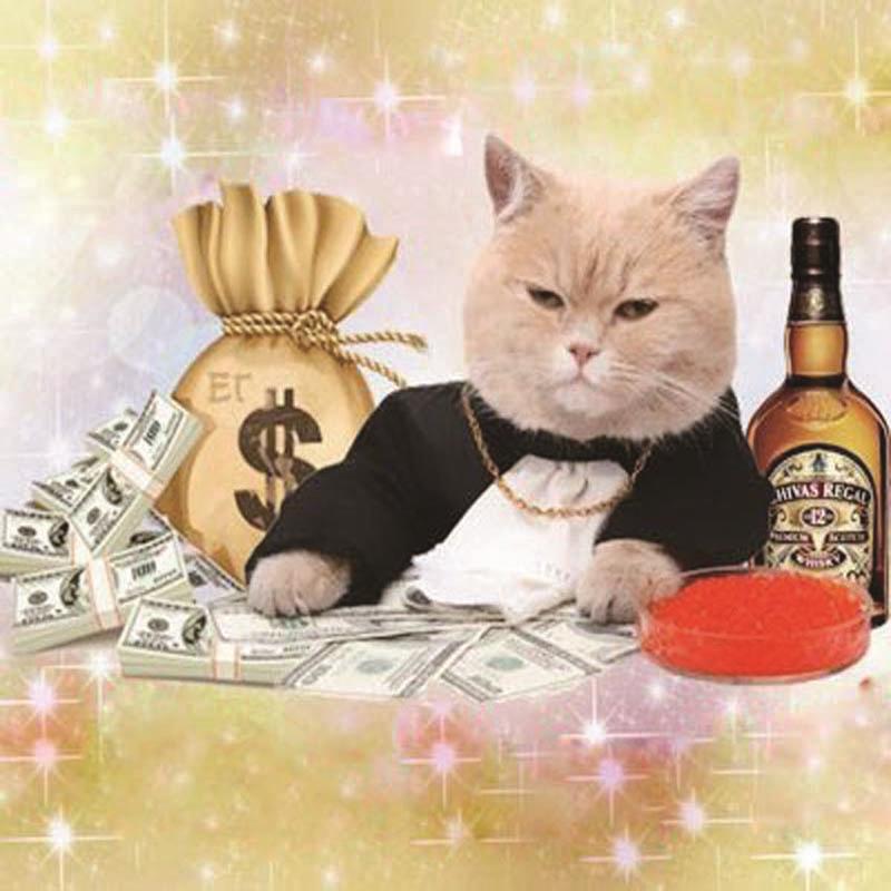 kedi zengin
